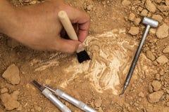 Skelet en archeologische hulpmiddelen De opleiding voor graaft fossiel Simula Stock Afbeelding
