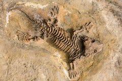 Skelet fossiel verslag van oud reptiel in steen Royalty-vrije Stock Foto