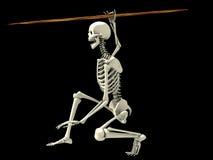 Skelet op een het Vechten Positie Stock Foto