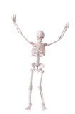 Skelet stock afbeeldingen