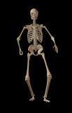 Skelet op zwarte achtergrond Royalty-vrije Stock Foto's