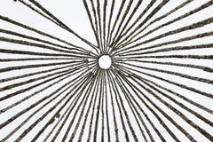 Skelet van een grote die wigwam van berkstaken wordt gemaakt Stock Afbeelding