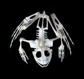 Skelet van een kikker. Stock Foto's