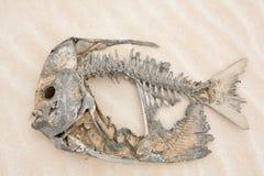 Skelet van een vis in de woestijn Royalty-vrije Stock Foto's