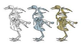 Skelet van een vogel Stock Foto's