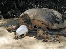 Skelet van overzeese schildpad Royalty-vrije Stock Fotografie