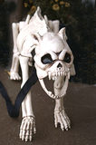 Skelet van Snauwende Hond Royalty-vrije Stock Foto's
