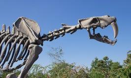 Skelet van voorhistorische dinosaurus stock afbeeldingen