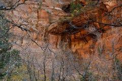 Skeletachtig bomen en het noordengezicht van Beatty-Punt, Vingercanions van Kolob, Zion National Park, Utah royalty-vrije stock afbeeldingen