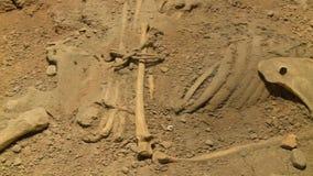 Skeletachtige overblijfselen in het vuil stock videobeelden