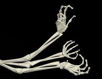 Skeletachtige Wapens Royalty-vrije Stock Afbeelding