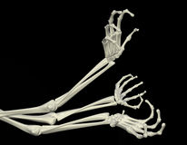Skeletal Arms. 3d skeletal arm, isolated, dark background Royalty Free Stock Image