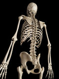 The skeletal back Stock Image