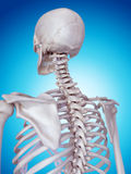 The skeletal back Royalty Free Stock Photography
