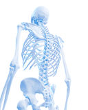 Skeletal back Royalty Free Stock Photos