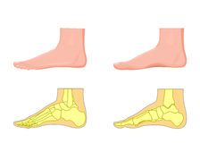 Skeletal and external view of an ankle Stock Photos