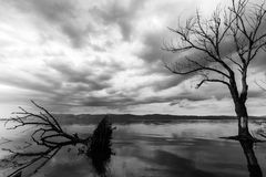 Skeletal and fallen trees on a lake, with overcast sky and water. Reflections Royalty Free Stock Photos