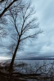 Skeletal and fallen trees on a lake shore, beneath a moody sky. Skeletal and fallen trees on a lake shore beneath a moody sky Stock Photography