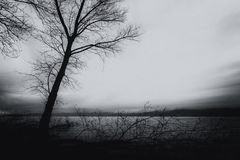Skeletal and fallen trees on a lake shore, beneath a moody sky. Skeletal and fallen trees on a lake shore beneath a moody sky Royalty Free Stock Photography