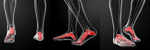 Skeletal  Feet. 3D rendering of the human Skeletal  Feet Stock Photography