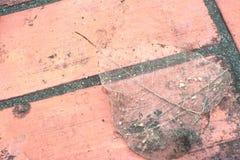 Skeletal fibers leaves on red brick block. Royalty Free Stock Images