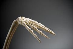 Skeletal hand. Skeletal human hand isolated on black royalty free stock images