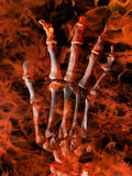 Skeletal hand in flames Royalty Free Stock Photo