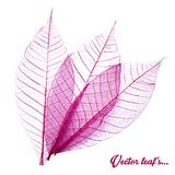 Skeletal leave with white background. Vector illustration Stock Image