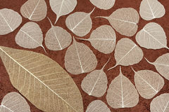 Skeletal leaves over brown handmade paper Stock Images