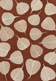 Skeletal leaves over brown handmade paper Stock Photos