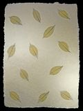 Skeletal Leaves Pattern 1. Skeletal Leaves on a rough hand made cotton paper royalty free stock photo
