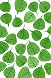 Skeletal leaves on white - background Royalty Free Stock Photo