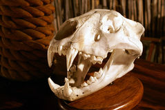 skeletal lion arkivbild