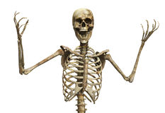 The Skeletal Scream Stock Image
