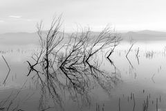 Trees and branches on the water Stock Photos