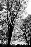 Skeletal trees 7 Royalty Free Stock Photos