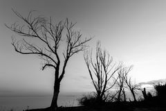 Skeletal trees on lake shore beneath an almost empty sky Royalty Free Stock Photo