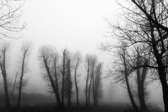 Skeletal trees in a park in the middle of fog. Some skeletal trees in a park in the middle of fog Stock Photo