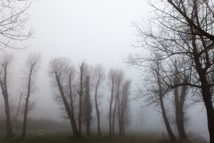 Skeletal trees in a park in the middle of fog. Some skeletal trees in a park in the middle of fog Stock Image