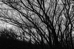 Skeletal trees silhouettes in winter, against an empty sky at dusk.  royalty free stock images