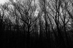 Skeletal trees silhouettes in winter, against an empty sky at dusk.  stock photos