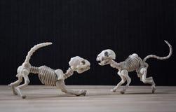 Skeletkat en hond Stock Afbeeldingen