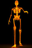 Skeleton. Walking skeleton by X-rays in red. 3D image Royalty Free Stock Photography