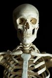Skeleton 2 Stock Images