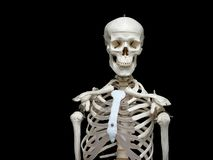 Skeleton Royalty Free Stock Images