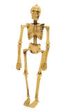 Skeleton Stock Images