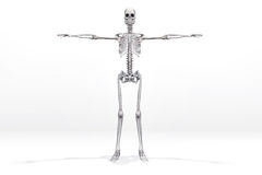 Skeleton Royalty Free Stock Image
