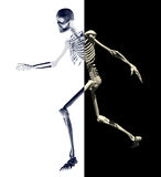 Skeleton-3 Imagem de Stock Royalty Free