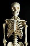Skeleton 3. A human skeleton on black background stock photos
