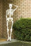 Skeleton. The plastic skeleton outside house Royalty Free Stock Photos